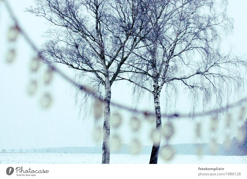 schneebaumkönige Natur weiß Baum Winter Umwelt kalt Traurigkeit Liebe Schnee Zusammensein träumen Zufriedenheit Feld stehen Romantik Ewigkeit