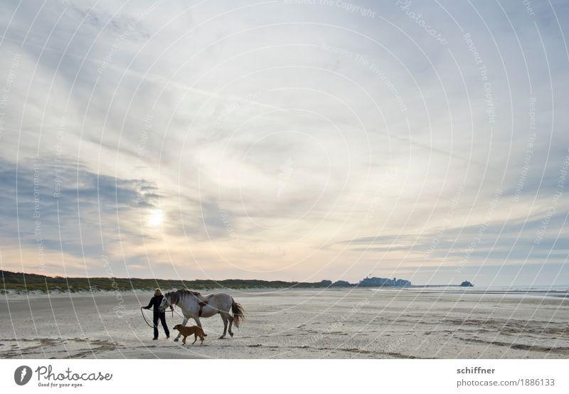 Belgische Weite Mensch Frau Himmel Hund Sonne Wolken Tier ruhig Ferne Strand Erwachsene Küste feminin Glück Zeit gehen