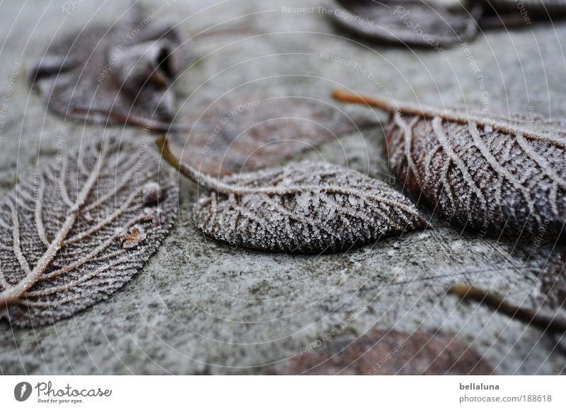 haltbar gemacht Umwelt Natur Pflanze Winter Klima Wetter Schönes Wetter Eis Frost Baum Sträucher Blatt kalt Raureif Farbfoto Außenaufnahme Morgen Tag Licht