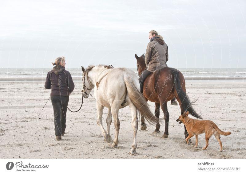 Belgischer Tag am Meer feminin Frau Erwachsene 2 Mensch Hund Pferd 3 Tier gehen Reiten Reitsport sprechen Strand Ferne ruhig Freizeit & Hobby Pferdenarr