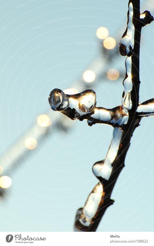 Die gläsernen Bäume von Mandala II Natur Himmel Baum blau Pflanze Winter kalt Eis glänzend Glas Wetter Umwelt frisch ästhetisch Frost Klima