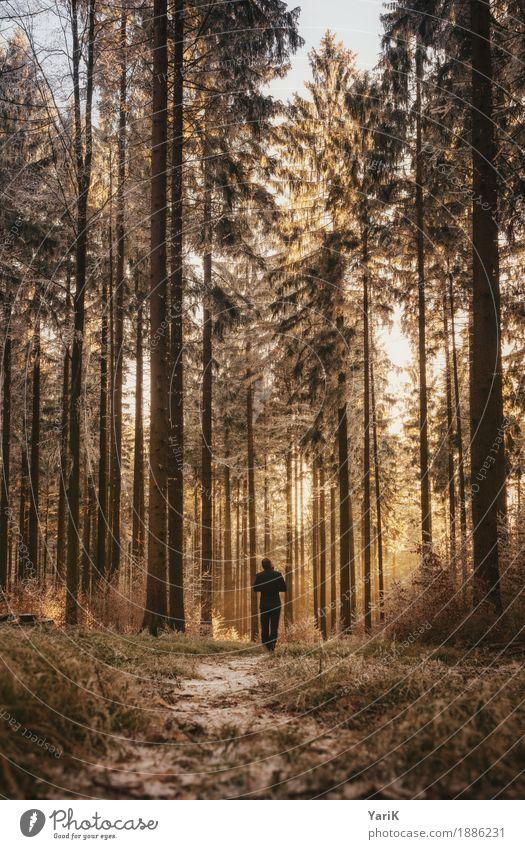 WALK maskulin Junger Mann Jugendliche Erwachsene 1 Mensch 18-30 Jahre Natur Winter Eis Frost Schnee Baum Wald gehen Spaziergang hoch kalt Wärme Fichtenwald