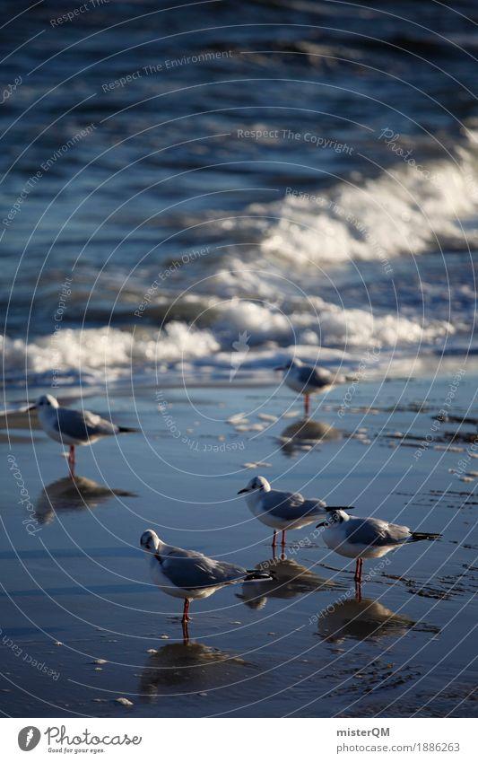 Kalte Füße. Natur Wasser Küste ästhetisch Möwe Möwenvögel Meerwasser