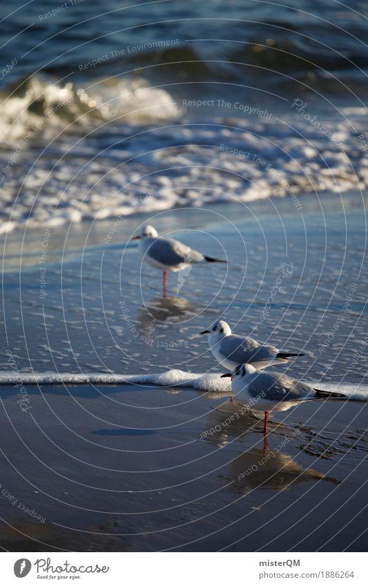 Gaffer V Natur Tier Küste Vogel ästhetisch Möwe Möwenvögel Meerwasser