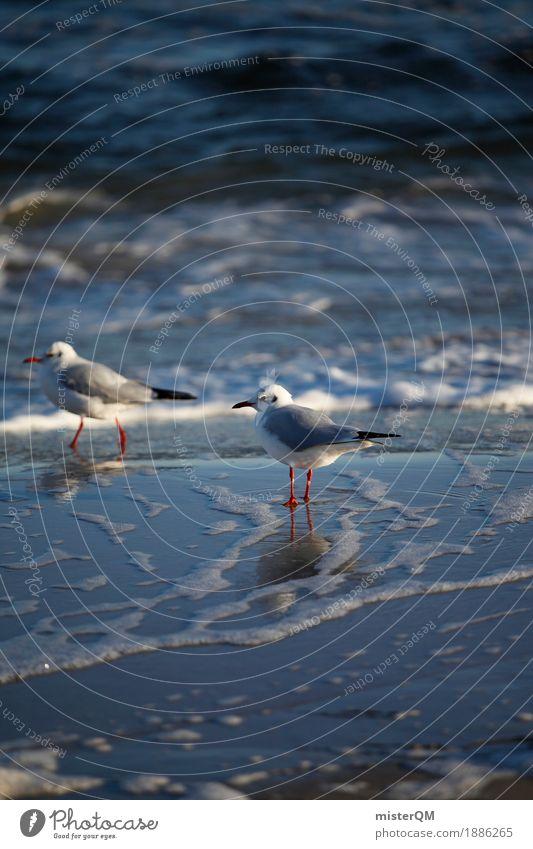 Gaffer IV Natur Meer Küste Vogel ästhetisch stehen warten Möwe Möwenvögel Meerwasser Möwendreck
