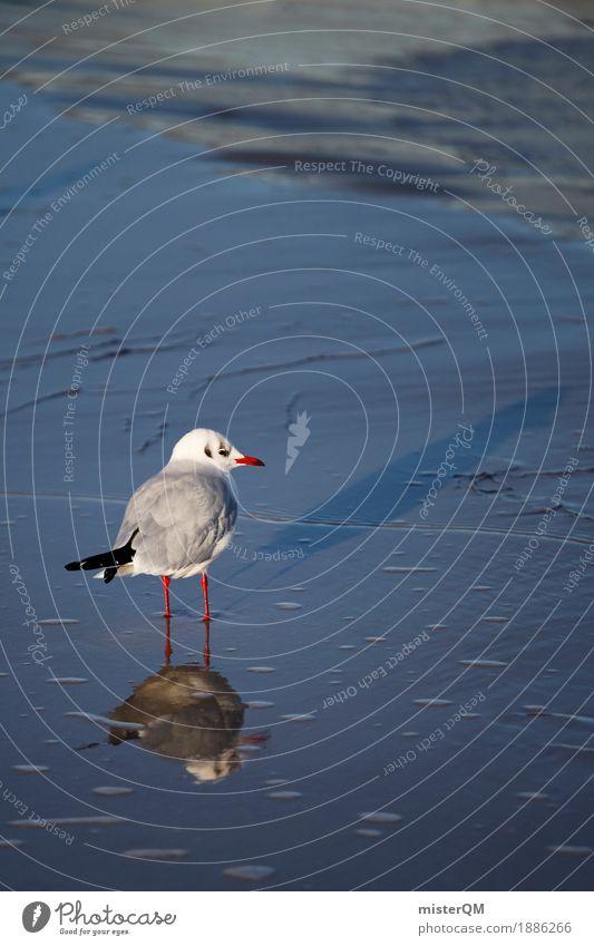 Gaffer III Natur Tier Küste Vogel ästhetisch Möwe Möwenvögel Meerwasser Strandleben