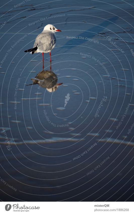 Gaffer II Natur Küste Zufriedenheit ästhetisch Möwe Möwenvögel Meerwasser Strandleben Möwendreck