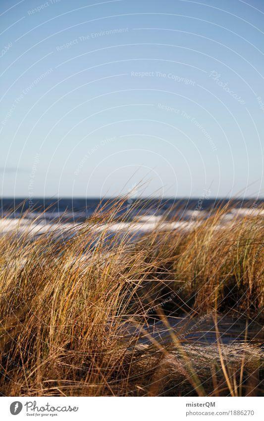 Dünengras V Ferien & Urlaub & Reisen Sommer Meer Küste Gras Kunst Deutschland ästhetisch Ostsee Sommerurlaub Stranddüne Grasland Urlaubsstimmung Ostseeinsel