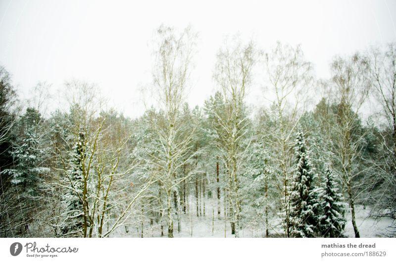 WINTER Umwelt Natur Landschaft Pflanze Himmel Horizont Winter Klima Wetter schlechtes Wetter Wind Eis Frost Hagel Schnee Baum Gras Sträucher Park Wald kalt