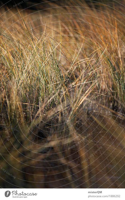 Dünengras III Natur grün Küste Gras ästhetisch Wind Ostsee Windstille wehen Dünengras Ostseeinsel