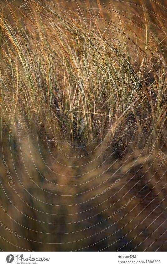 Dünengras II Kunst Kunstwerk ästhetisch Ostsee Natur Außenaufnahme Ostseeinsel Gras Wind wehen Windstille Küste Farbfoto Gedeckte Farben Nahaufnahme