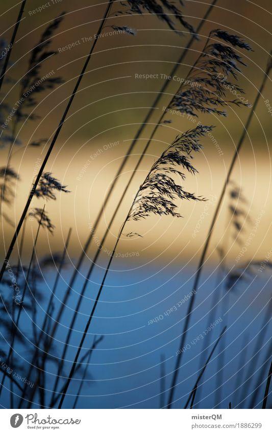 Morgenschilf. Natur Küste Gras Kunst ästhetisch Wind Seeufer Flussufer Schilfrohr abgelegen dezent