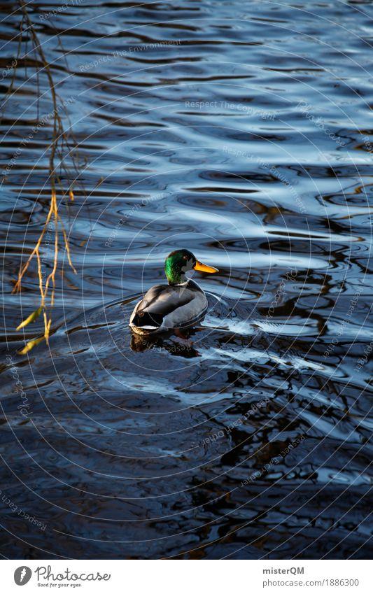 Enter. Kunst Vogel ästhetisch Teich Entenvögel Vogeljagd Ententeich