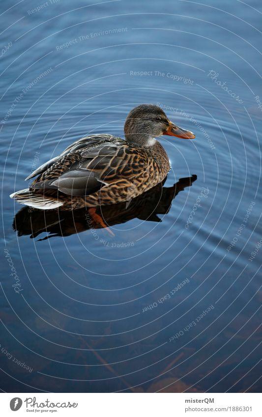 Dicke Ente. Kunst ästhetisch Entenvögel Ententeich Im Wasser treiben Vogel Tier heimisch Feder Farbfoto mehrfarbig Außenaufnahme Experiment Menschenleer