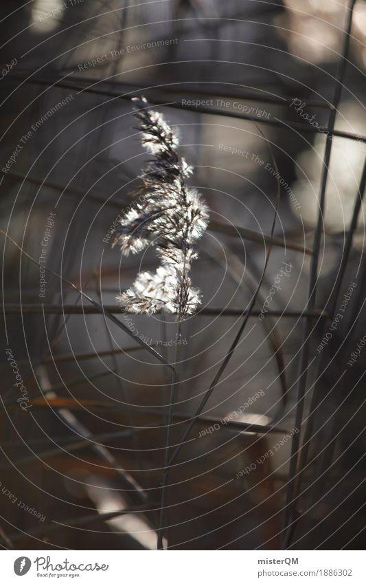 Abendschilf. Natur Küste Gras Kunst Idylle ästhetisch Wind weich Seeufer Flussufer Schilfrohr Windstille wehen friedlich