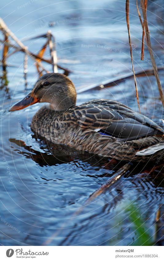 Uferleben. Kunst Schwimmen & Baden Vogel Idylle ästhetisch Im Wasser treiben Teich Ente friedlich Entenvögel Ententeich