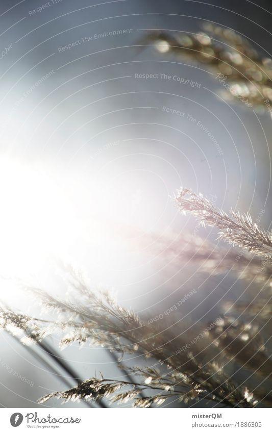 Sonnenwind. Sommer Sonne Einsamkeit ruhig Wiese Gras Kunst Idylle ästhetisch Getreide abgelegen Ruhestand wehen friedlich