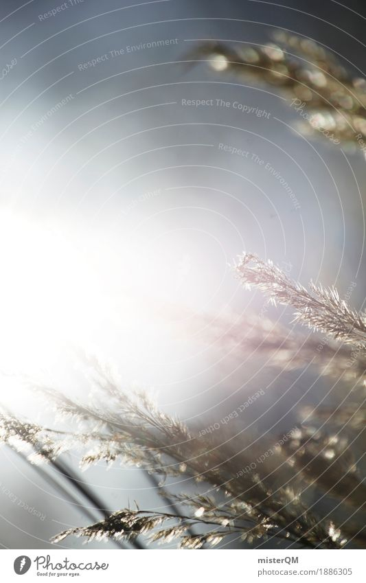 Sonnenwind. Sommer Einsamkeit ruhig Wiese Gras Kunst Idylle ästhetisch Getreide abgelegen Ruhestand wehen friedlich
