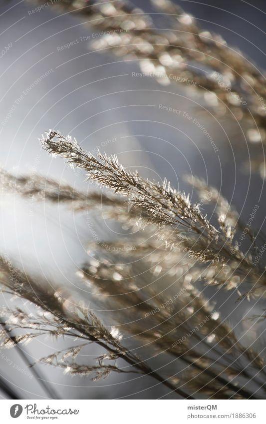 Windtänzer. Kunst ästhetisch wehen Gras dezent Wachstum Natur Naturschutzgebiet Getreide Getreidefeld Gräserblüte Idylle friedlich Farbfoto mehrfarbig