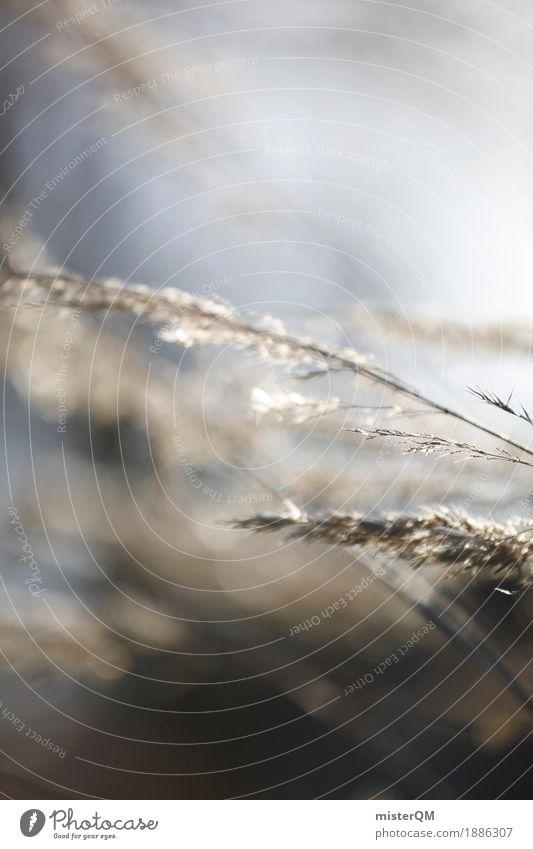 Gräserblüte. Wiese Gras Kunst ästhetisch Wind weich Windstille Straßenrand Windböe Weichzeichner