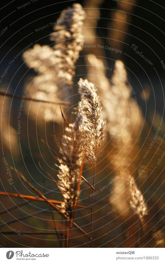 Sonnenwind III Kunst ästhetisch Stroh Wiese Gras Gräserblüte wehen Wind Windstille Pflanze Herbst Sommerabend Farbfoto Gedeckte Farben Außenaufnahme Nahaufnahme