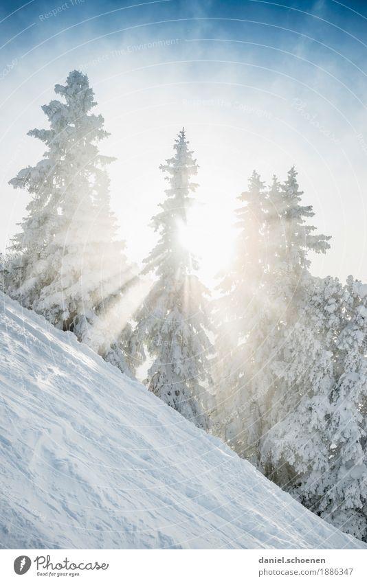 Vorfreude 2 Ferien & Urlaub & Reisen Winter Schnee Winterurlaub Berge u. Gebirge Umwelt Natur Klima Eis Frost Baum hell blau weiß Gedeckte Farben Außenaufnahme
