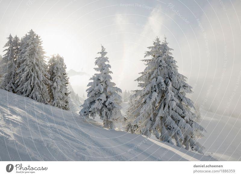 der Winter der vor der Haustür steht Ferien & Urlaub & Reisen Tourismus Schnee Winterurlaub Berge u. Gebirge Umwelt Natur Sonne Baum Alpen hell Einsamkeit kalt