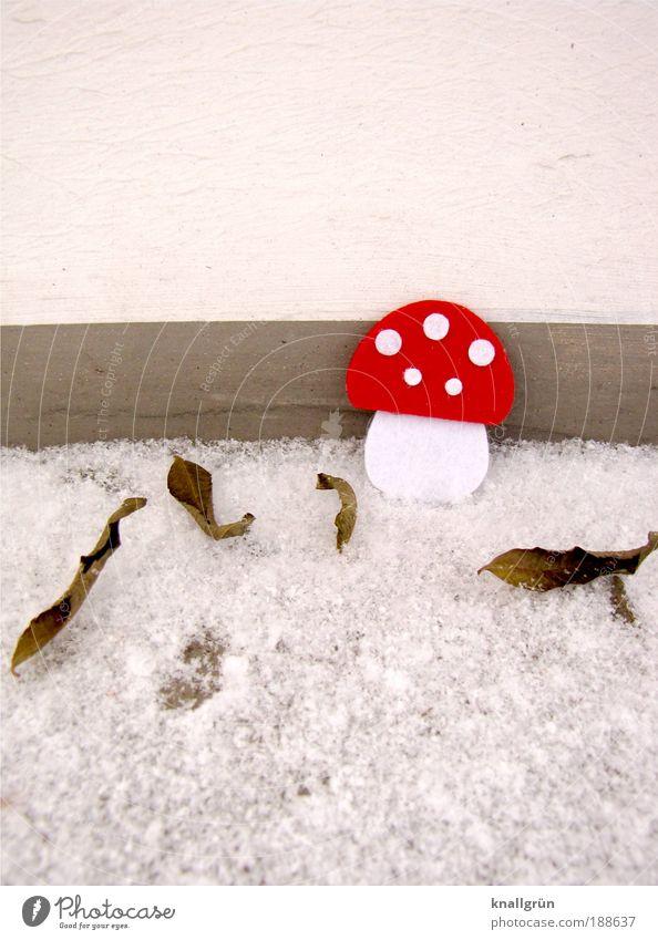 Rotkäppchen Tier schlechtes Wetter Eis Frost Schnee Pflanze Pilz Fliegenpilz Blatt frieren stehen kalt grau rot weiß Punkt Winter Filzpilz Blätter Neuschnee