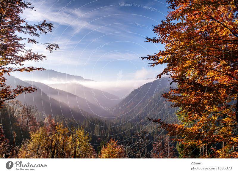 Kunterbunt Abenteuer Berge u. Gebirge wandern Umwelt Natur Landschaft Himmel Wolken Herbst Schönes Wetter Nebel Baum Sträucher Wald Alpen frisch gigantisch