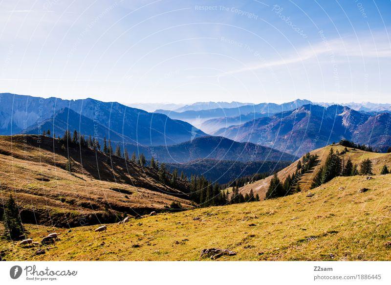 Richtung AUT Natur grün Landschaft ruhig Berge u. Gebirge Umwelt Herbst Wiese natürlich Deutschland Horizont Freizeit & Hobby wandern Idylle Perspektive