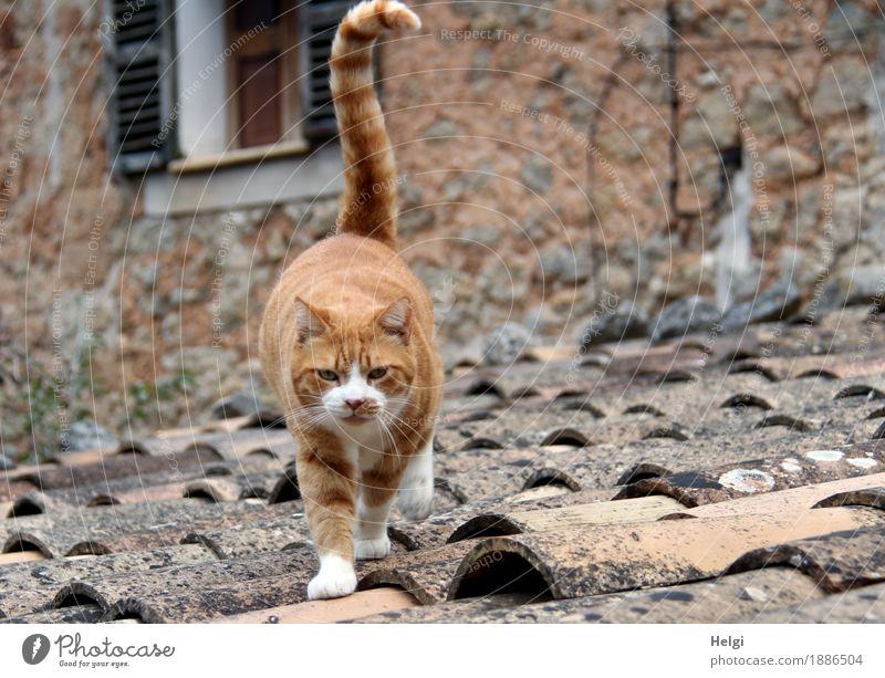 neugierig... Katze alt weiß Tier Fenster Umwelt Wand Leben Gebäude Mauer Freiheit grau braun authentisch Insel laufen