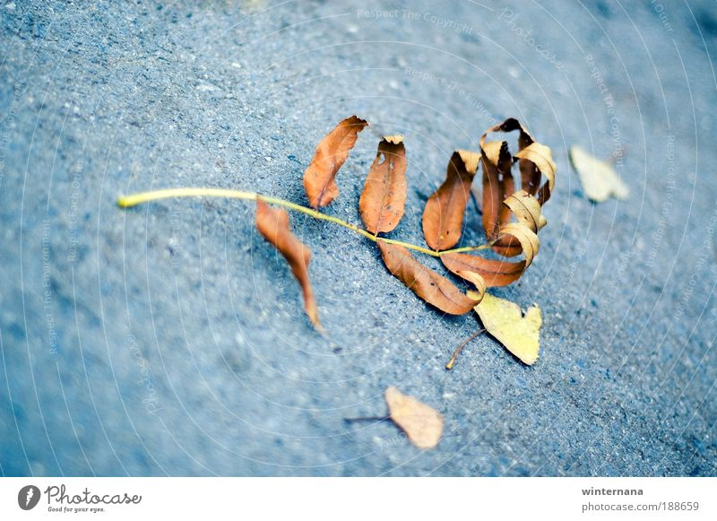 Natur schön Blatt Gefühle Herbst Park Zusammensein Kraft Erfolg Fröhlichkeit Schönes Wetter Warmherzigkeit Idee Macht Schutz entdecken