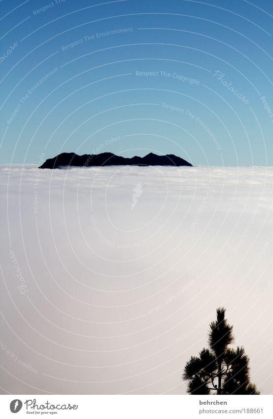 wolkenschnee Ferien & Urlaub & Reisen Tourismus Ausflug Ferne Freiheit Natur Landschaft Himmel Wolken Schönes Wetter Insel La Palma Kanaren Zufriedenheit