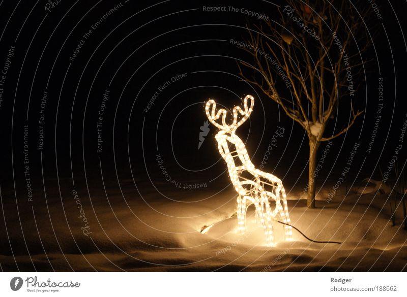 Rentier im Schnee Weihnachten & Advent Winter Tier Schnee Stimmung Feste & Feiern Langzeitbelichtung leuchten Lichterkette Rentier