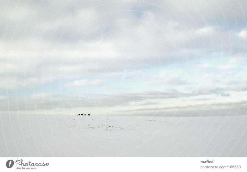 Rehformation Himmel Winter Ferne Schnee Landschaft Eis Feld Umwelt Frost Tiergruppe Wandel & Veränderung Wildtier Reh Herde