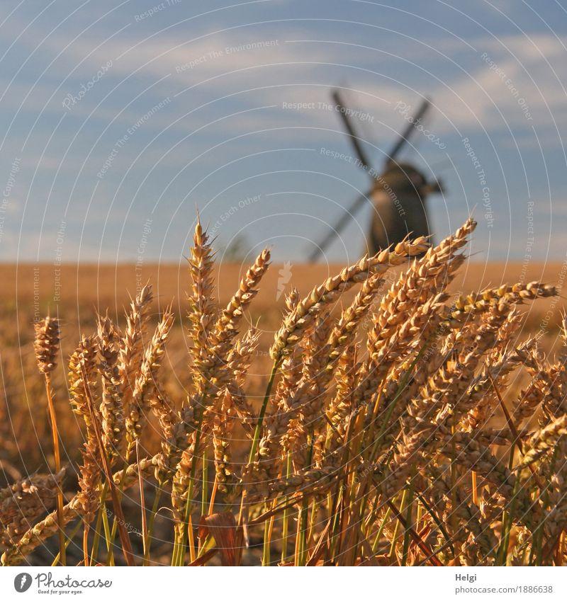 Sommer auf dem Land II Himmel Natur Pflanze blau Landschaft ruhig Umwelt natürlich Lebensmittel grau braun Stimmung Feld Wachstum Idylle