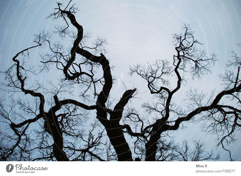 Alter Baum Himmel Natur alt Winter Wald Umwelt Tod Traurigkeit Park Wetter Klima groß kaputt bedrohlich Ast