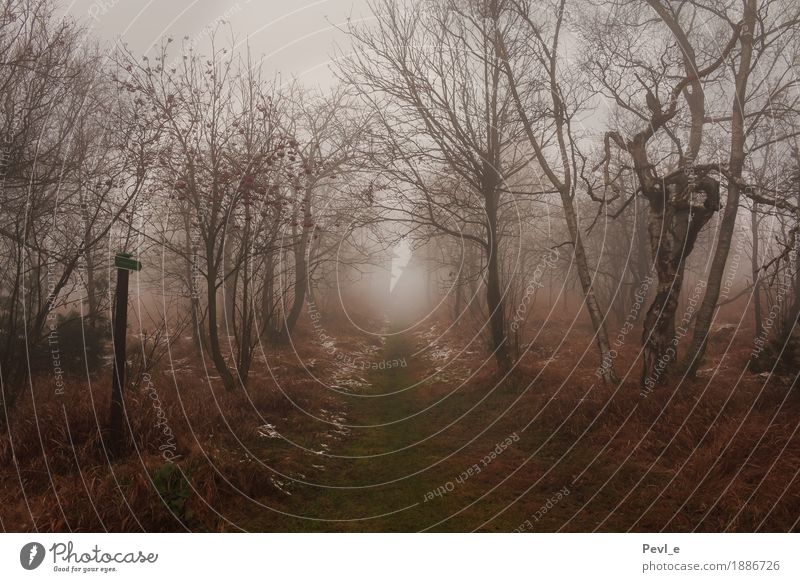 Nebelpfade wandern Umwelt Natur Landschaft Schnee Baum Gras Sträucher Wald Wege & Pfade Schilder & Markierungen Bewegung frieren Traurigkeit bedrohlich dunkel