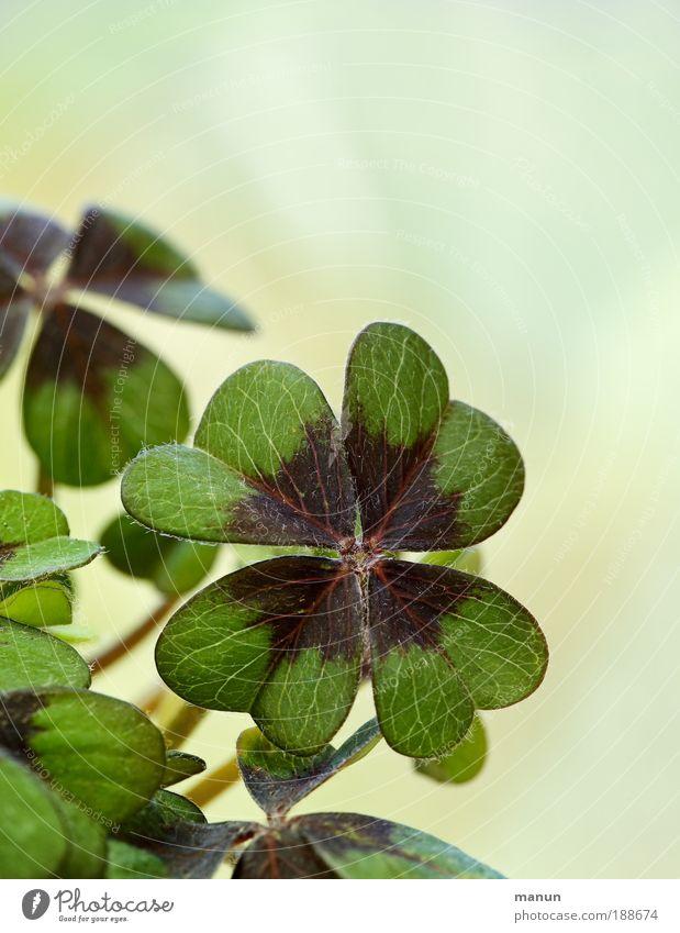 bonne chance! Natur grün Pflanze Sommer Blatt Gefühle Frühling Glück Erfolg frisch Hoffnung Fröhlichkeit Zukunft Wunsch Lebensfreude Zeichen