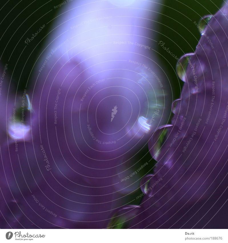 ein Blümchen für ad Rian... Natur Blume Wassertropfen Blühend violett