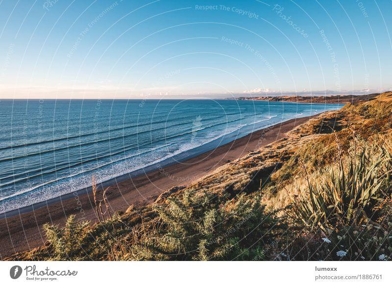 raglan Natur Landschaft Wasser Wolkenloser Himmel Sommer Küste Strand Meer Tasmanische See Freiheit Frieden Reisefotografie Neuseeland Wellen blau beige