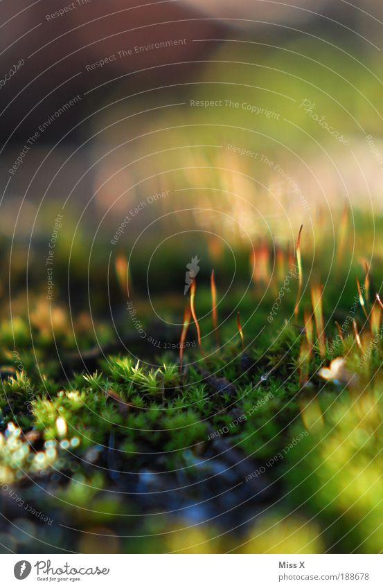 Moos Natur grün Pflanze Sommer Umwelt Wiese Herbst klein Park nass Wachstum Idylle dünn