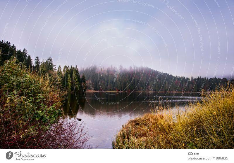 Spitzingsee Abenteuer Berge u. Gebirge wandern Natur Landschaft Herbst schlechtes Wetter Nebel Gras Sträucher Wald Alpen Seeufer kalt nachhaltig natürlich grün