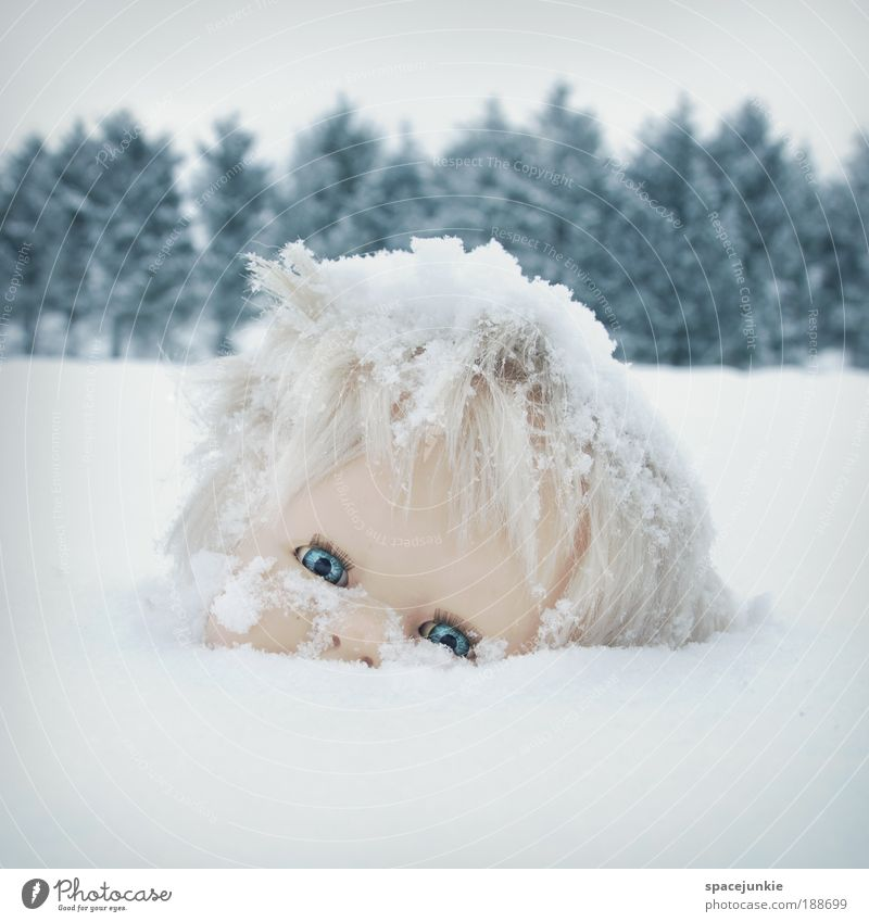 Daisy Natur Baum Landschaft dunkel kalt Traurigkeit Schnee Eis Angst verrückt beobachten Vergänglichkeit Frost Trauer Hügel gruselig