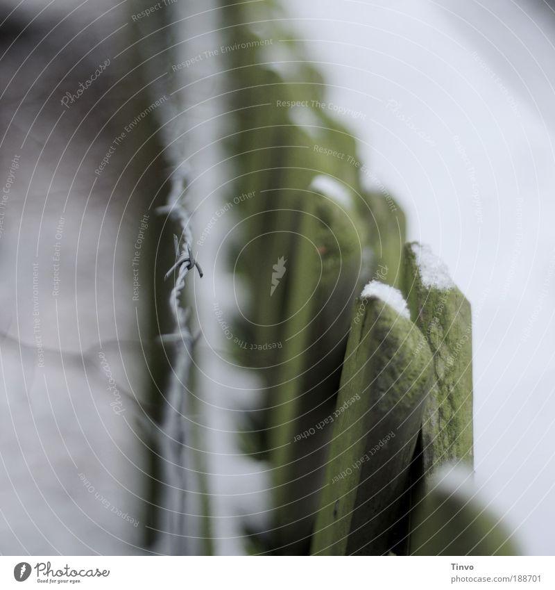 alle Latten am Zaun ? grün Winter Garten Metall Sicherheit Spitze Grenze stachelig Stacheldraht Begrenzung Stacheldrahtzaun eingezäunt Holzzaun Grünspan