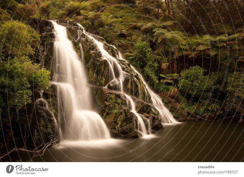 Waterfall New Zealand #1 Umwelt Natur Landschaft Pflanze Wasser Wassertropfen Baum Sträucher Moos Farn Urwald Teich Bach Wasserfall ästhetisch schön Kraft