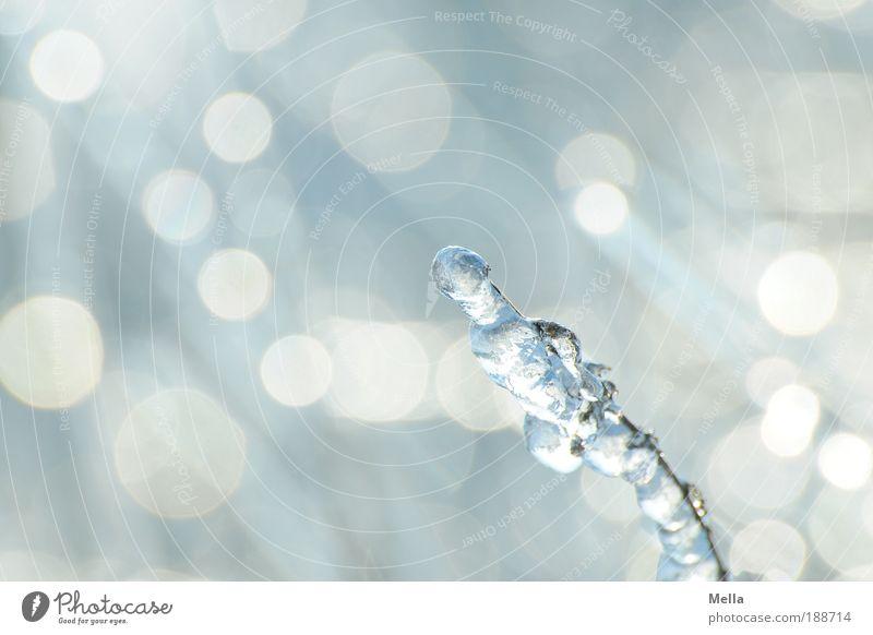 Glasgarten Natur weiß Pflanze Winter kalt Park Eis hell Stimmung glänzend Glas Wetter Umwelt frisch Detailaufnahme ästhetisch