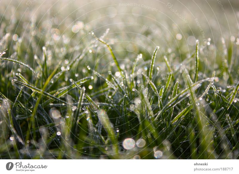 Tau Umwelt Natur Pflanze Erde Wasser Wassertropfen Winter Schönes Wetter Eis Frost Gras Wiese nass natürlich grün ruhig Aufbruch Hoffnung Farbfoto Außenaufnahme