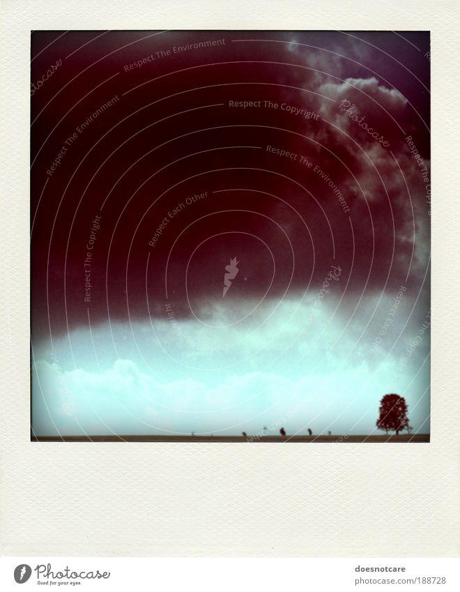 im rahmen der möglichkeiten. Natur Landschaft Pflanze Klima schlechtes Wetter Unwetter bedrohlich Polaroid Baum Einsamkeit Gewitter analog Regen Sturm Wolken