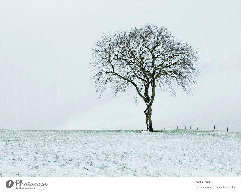 s i l e n c e Natur Himmel Pflanze Winter ruhig Schnee Wiese Landschaft Umwelt Horizont Erde Hügel